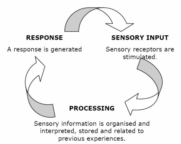 The Cycle of Sensory Functions